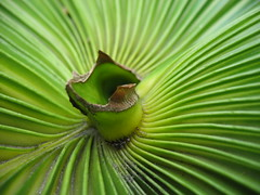 Green For You (dezertgrrl) Tags: plant macro green spiral jamaica tectures