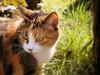 **Perplessità** (Danielina♥) Tags: pet nature animal cat kitten expression kitty natura sguardo gatto animale micio muso mici naturalmente espressione mcb1419