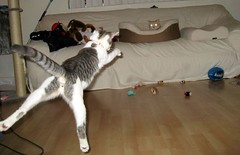 Milo uses his laser beam eyes to levitate Zumi. - by Malingering