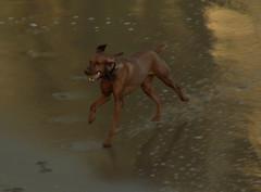 20070312-046-crop (I, Puzzled) Tags: california dog santacruz ipuzzled westside 2007 dogdayafternoon 200703 200070312