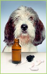 Dog Taking Medicine
