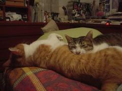 [柳丁] 你是我的抱枕 (6)