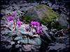 New Life (makunia) Tags: bravo magicdonkey flickrsbest abigfave artlibre impressedbeauty superaplus aplusphoto ultimateshot irresistiblebeauty superbmasterpiece goldenphotographer