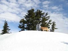 Summit Sadie at the top of Margaret