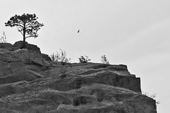 Red Rocks in B&W (theentiremikey) Tags: bw landscape colorado rocks parks redrocks vulture eosd60 sigma1850f28