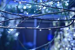wassertropfen (dealers_workshop) Tags: nature water rain wasser regen wassertropfen