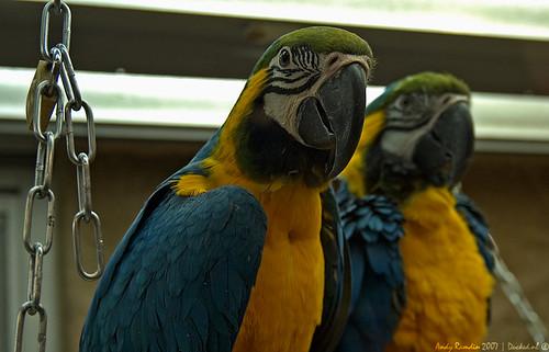 Ducked.nl - Caged Friends - Macaw - Ara Arauna