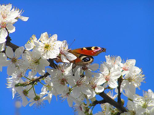 Hidden in spring