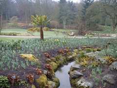 Palm tree amid sea of daffodils (Steve and Clare) Tags: garden gardening horticulture 2007 rhsharlowcarr