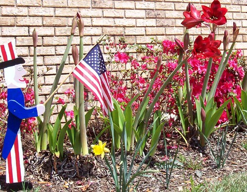 A is for American flag, Azaleas, and Amaryllis
