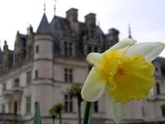 Primavera en el castillo Chenonceau