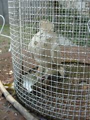 l'uccellino senza testa (nicesenzatesta) Tags: nice francia poitiers uccellino senzatesta alicetambellini