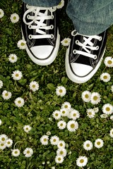 We'Re All Made Of Allstars. Thirteenth edition. (FotoRita [Allstar maniac]) Tags: life flowers italy rome roma verde green colors digital canon shoes objects converse fiori myfavourites canoneos350d eos350d prato allstar scarpe margherite byfotorita wereallmadeofallstars thirteenthedition