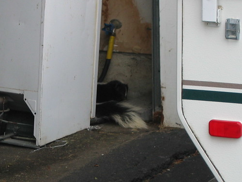 Skunk in the garage