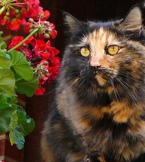 Miss Mina with Red Geranium