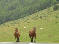 Fred & Paul (Lillibit) Tags: huesca pirineos aragn valledetena