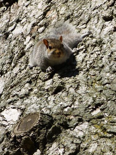 Crouching Rodent, Hidden Squirrel c