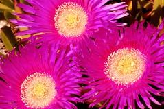 Around the hotel (DWoltereckPhotography) Tags: california county pink flowers flower colors closeup d50 washington nikon vivid clark wa sigma105mmmacro clarkcounty nikond200 diamondclassphotographer flickrdiamond dagmarakadee