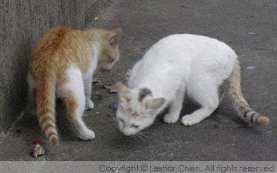 新埔車站-貓咪