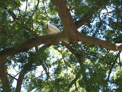 Sydney 024 (Ingrid and Terje) Tags: ingrid bat sydney flyingfox royalbotanicalgardens terje