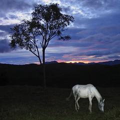 Dawn Horse - Matutu - 2006