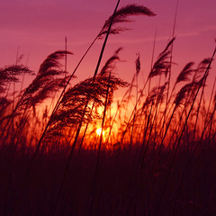 sunset in medford marsh - by paul+photos=moody