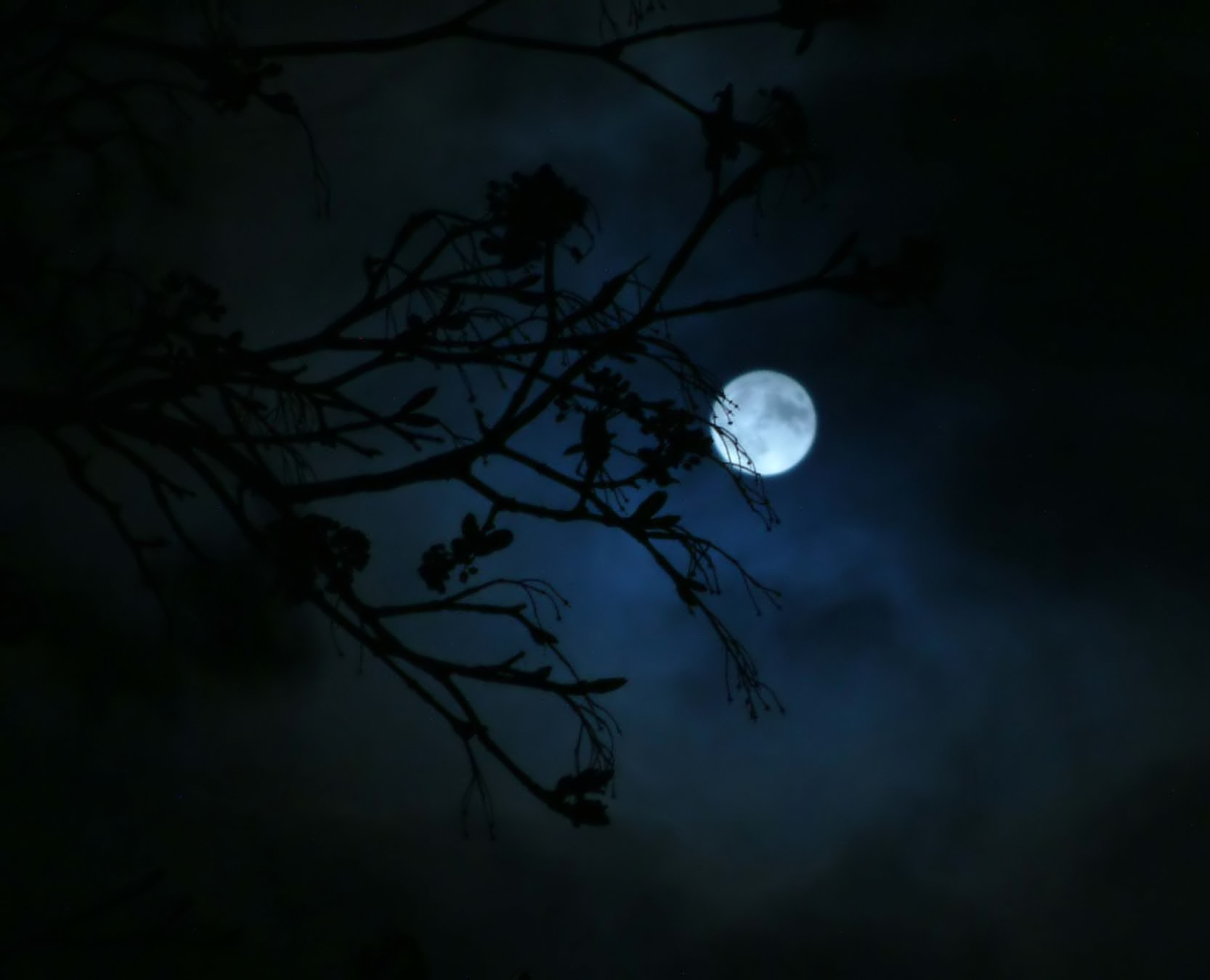 ... night sky dark moon black spring sea fullmoon buds late shoots cloudy