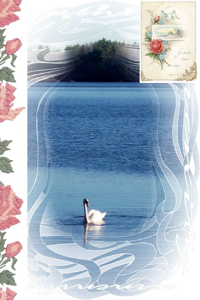 pretty swan card