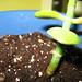 Baby Jade & Soil macro