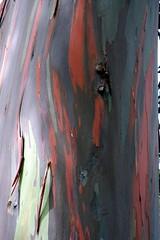 IMG_0160 (morphblade) Tags: rainbowtree