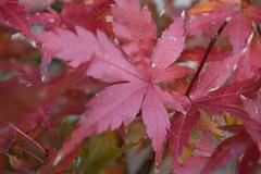 PC105608.jpg (plasticskin2001) Tags: leaf