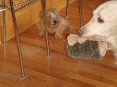 Varla, Frisket and the Hedgehog
