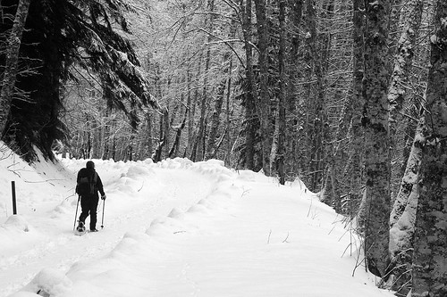 snowshoe hike at Mt. Rainier