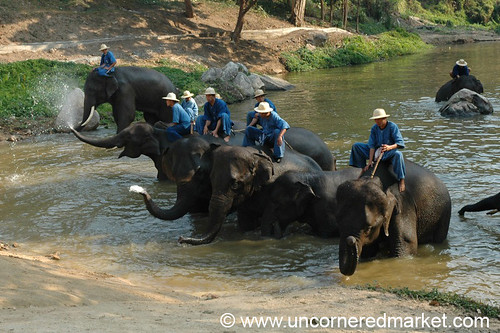Bath Time at Lampang Elephant Conservancy