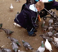 Gimme, gimme, gimme! (me'nthedogs) Tags: pigeon feedingthebirds vogonpoetry