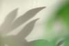 Soft Shadows (Mark Rutter) Tags: shadow plant blur umbrella soft all shadows graphic f3 subtle i120 blurfection graphich markrutter