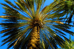 Lincoln Road Queen Palm - by MrClean1982