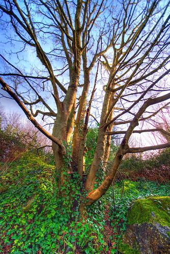 021507 tree 1
