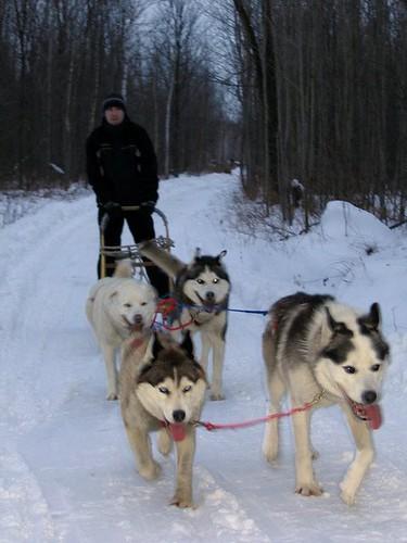 Me Dogsledding