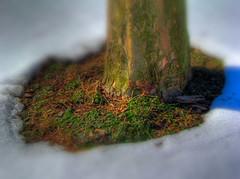Spring Melt - by SzymonB