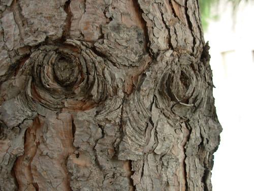 arbre inquietant