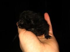 IMG_3618 newborn