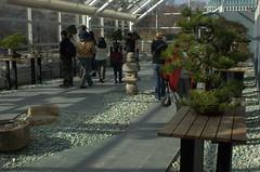 Bonsai Museum, Steinhardt Conservatory, BBG