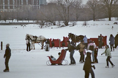 Sleigh horses on Ottawa's Dow's Lake for Winterlude. (Steve Brandon) Tags: winter people horse lake snow ontario canada slr film ice geotagged penis cheval frozen carriage ride hiver ottawa skaters passengers neige sleigh glace rideaucanal winterlude horseman  filmphotography calche nikonf65 dowslake baldeneige horsedriver lacdow
