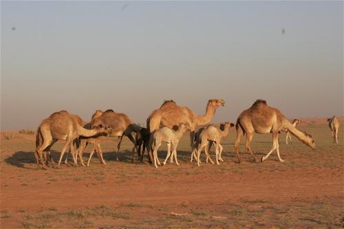 Dubai Desert Safari - 17