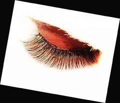 eyelashes (drburtoni) Tags: eye lashes