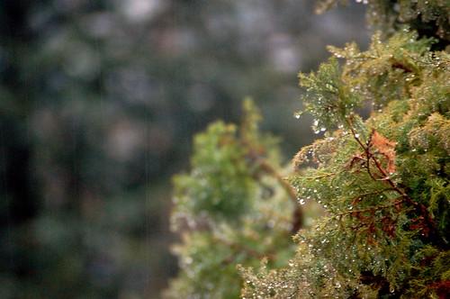 Vancouver Rain 3