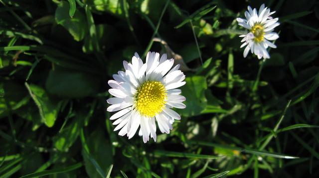 Daisy Photography