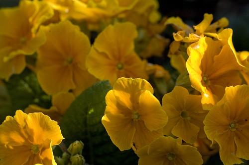 FLOWERS - BOTANIC GARDENS