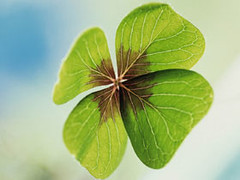 four-leaf clover3